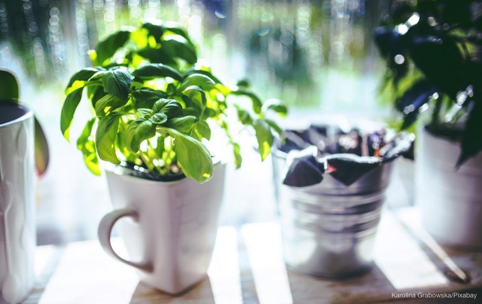 Pěstujeme bylinky v kuchyni – těchto 7 u vás nesmí chybět