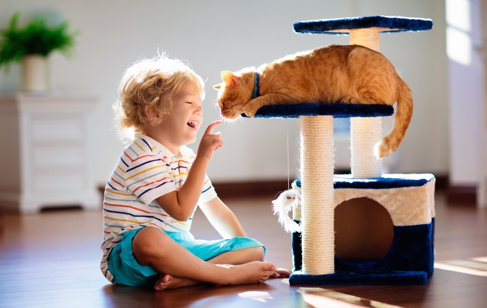 Není to žádná hračka, když do domu přibyde kočka